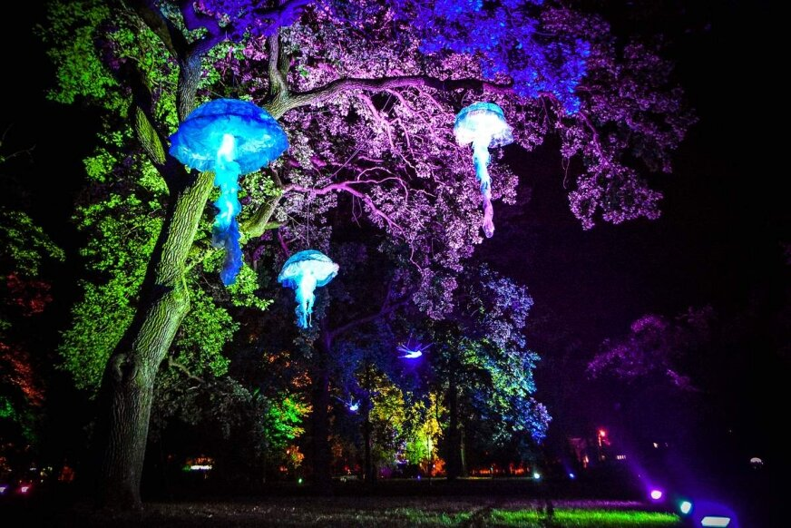 Tak wygląda nocą niesamowity park w Skierniewicach [FILM i ZDJĘCIA]