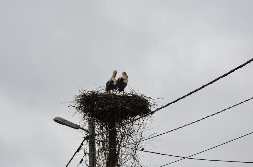 Bociany wróciły do Przybyszyc