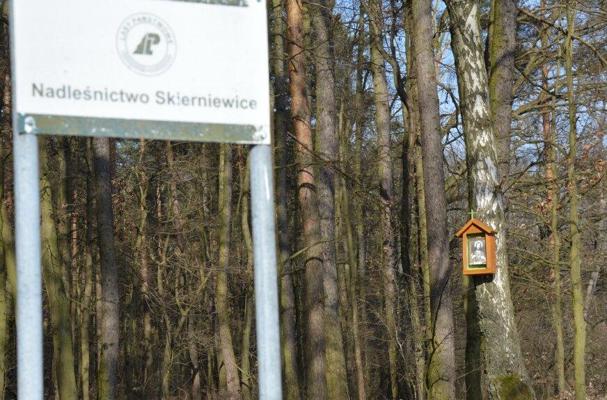 Fundacja Tu i Teraz podkreśla, że las w Trębaczewie to urokliwy rezerwat przyrody położony w gminie Sadkowice
