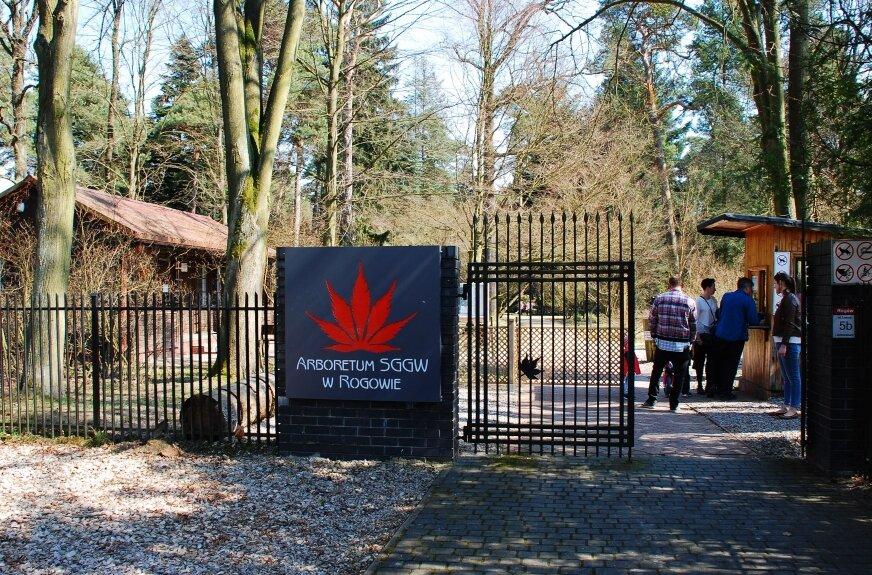 Arboretum w Rogowie zaprasza