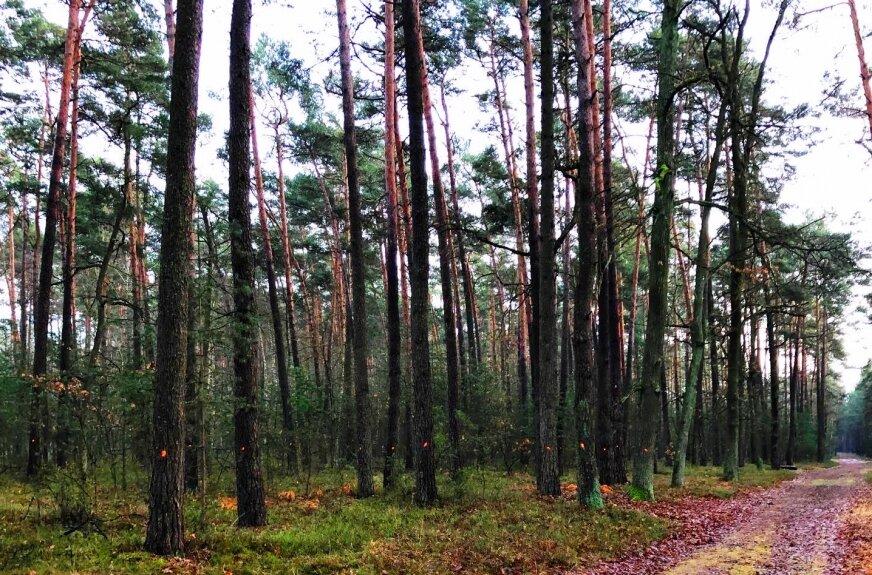 Nie rżnijcie już tych lasów!
