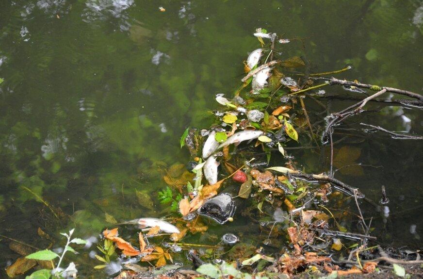 Przechodnie zauważyli śnięte ryby w rzece przepływającej przez park
